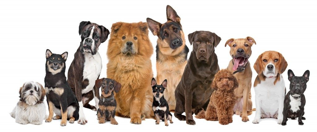 Different dog breeds