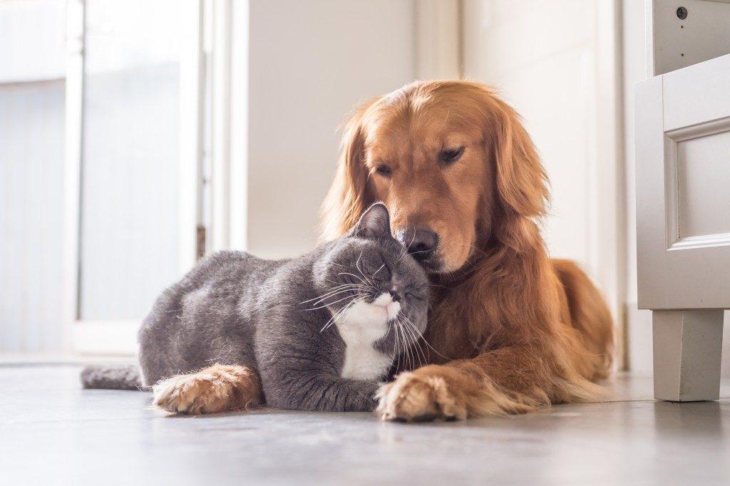 Pets in your condo