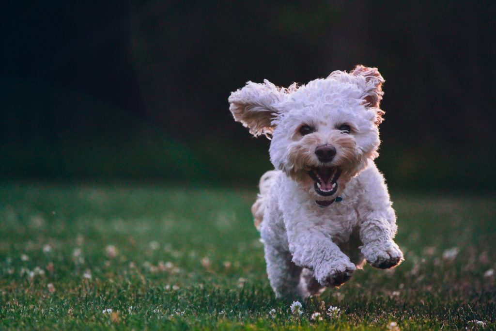 cute dog running